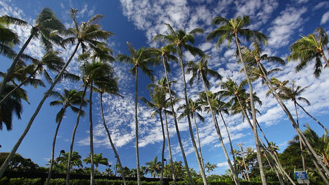 Palm Trees Stock Video Footage