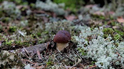 mushrooms Stock Video Footage