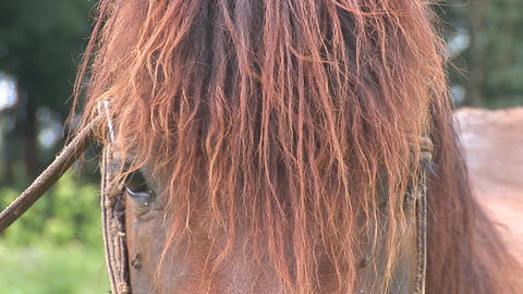 horse 1 Stock Video Footage