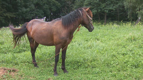 horse 3 Stock Video Footage