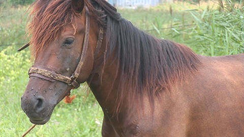 horse 17 Stock Video Footage