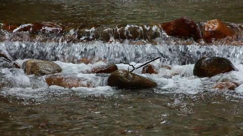 Fresh Water Salmon Spawning Stock Video Footage