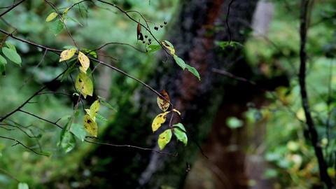 autumn Stock Video Footage