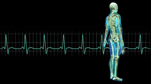 male lay figure and electrocardiogram Animation
