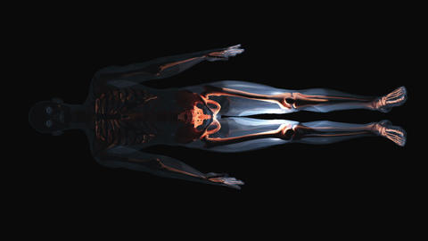 skeleton on black background Stock Video Footage