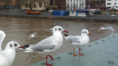 seagulls close frankfurt skyline slowmo Footage