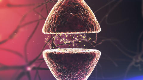 Brains Neurons. Chemical synapse. Closeup Animation