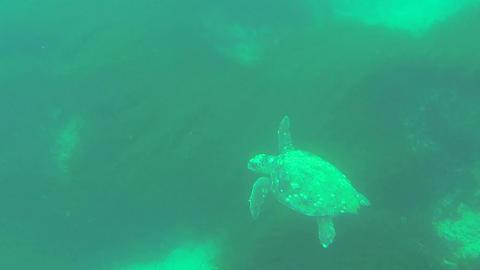 Caretta caretta sea turtle swimming deep in sea Footage