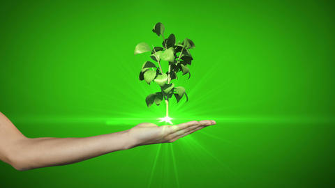 Hand presenting digital green plant growing Animation