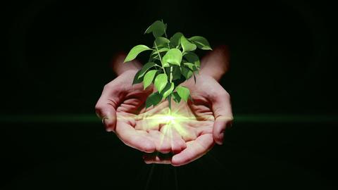 Hand presenting digital green plant growing Animation