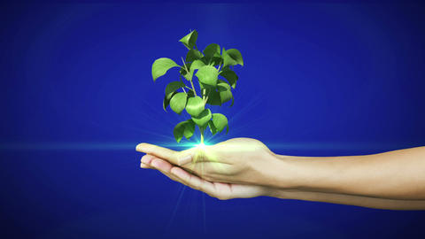 Hands presenting digital green plant growing Animation