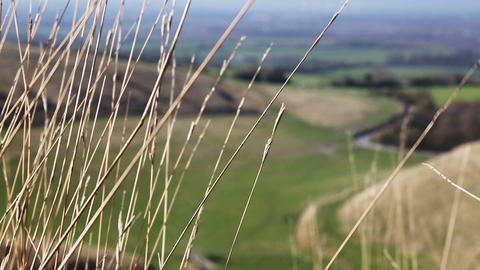 Grasses Above Valley stock footage