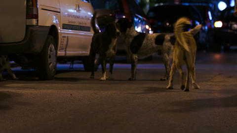 Three Stray Dogs In The Street At Night Footage