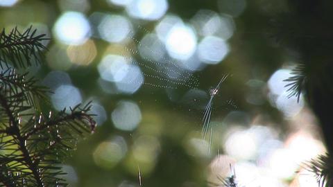 web 2 Footage