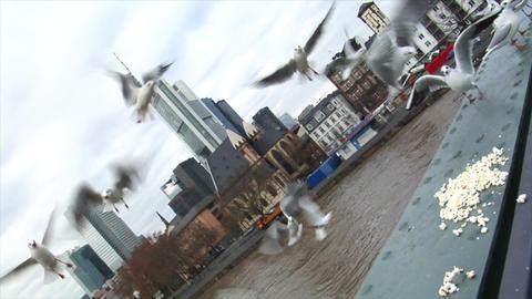 feed seagulls frankfurt skyline slowmo Stock Video Footage