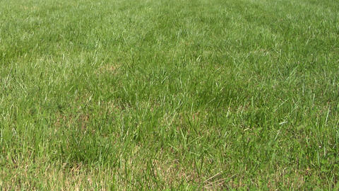 lawn grass texture 01 Stock Video Footage