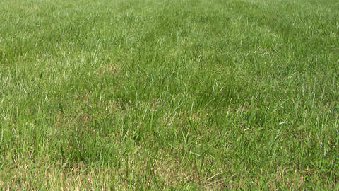 lawn grass texture 01 Footage