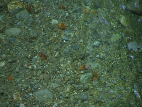 clear water 1 Stock Video Footage