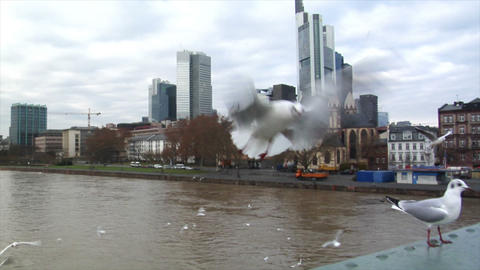 many seagulls frankfurt skyline slowmo Stock Video Footage