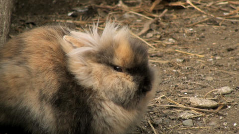 adorable rabbit Stock Video Footage