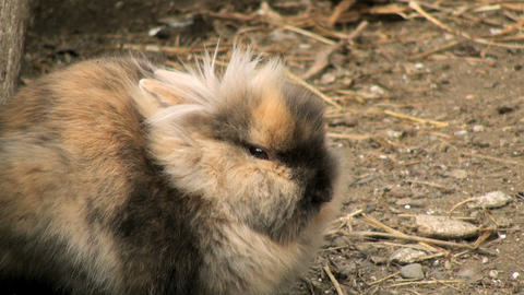 Adorable Rabbit stock footage