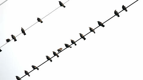 Birds on wires Stock Video Footage