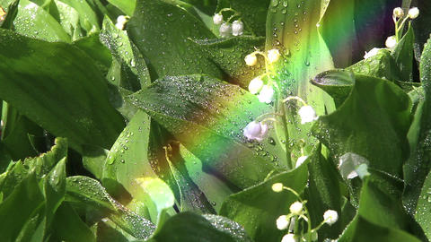 Daisies in a rainbow Stock Video Footage
