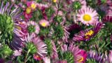 Flower Fields stock footage