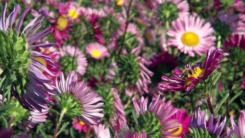 Flower Fields Stock Video Footage