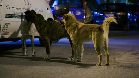 Three Tramp Dogs In The Street At Night Footage
