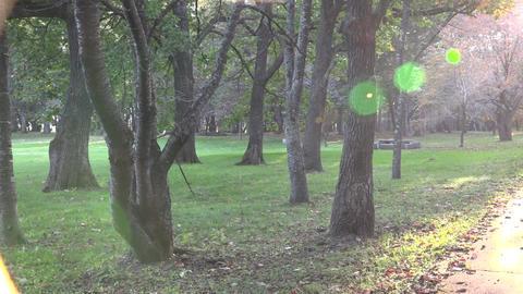 公園 002 ライブ動画