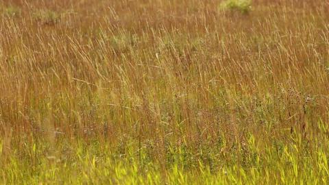 Autumn Grass 03 stock footage