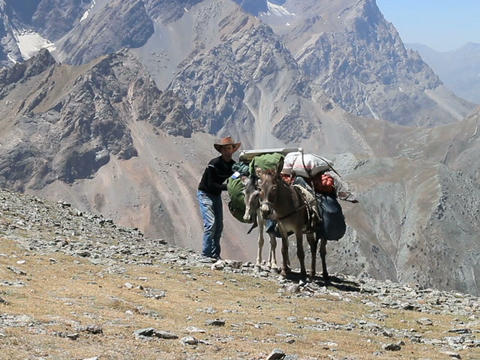 Drover strengthens the cargo on a donkey. 640x480 Footage
