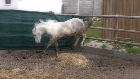 Horses inside a Fence Footage