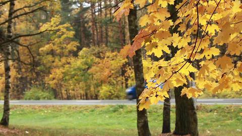 Road rain autumn Footage