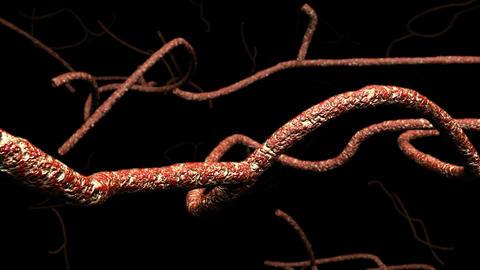 Microscopic Ebola Virus 3 D Animation 1 Animation