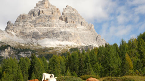 4k UHD Tilt Three Peaks To Cows Dolomite Alp 11542 stock footage