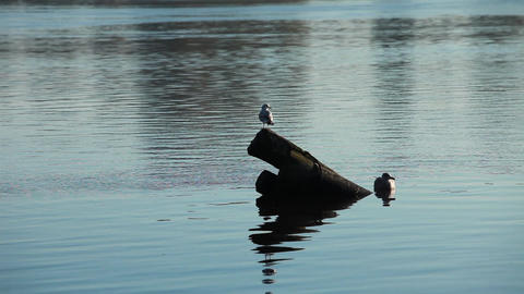 Two Seagulls In The Pile stock footage