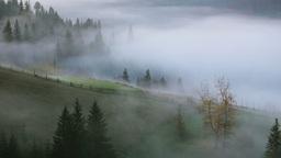 Fog On The Mountain Pasture stock footage