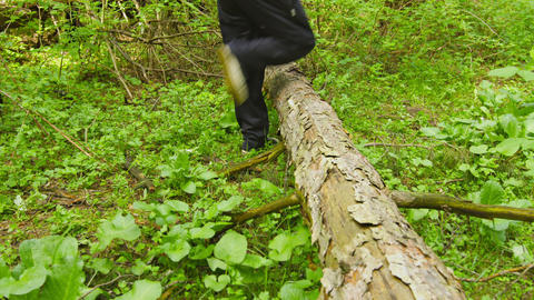 Hiking through the forest. Tree trunk lying on the Footage