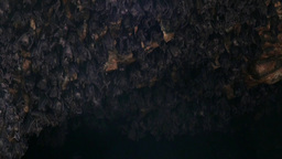 Bats In Bat Cave Goa Lawah Bali Indonesia stock footage
