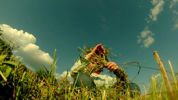 little girl weaves a wreath of grass on the field Footage
