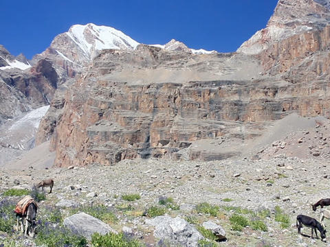 Donkeys grazing in the mountains. Panorama. Pamir. Footage