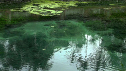 Holy Springs Water Surface Reflection With Swallow stock footage