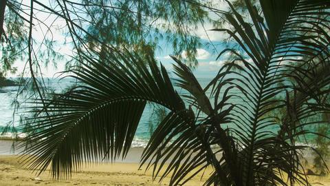 Wild beach. View through the trees Footage