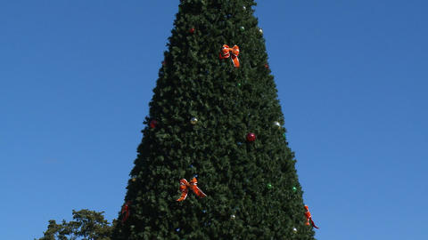 Big Christmas tree in Miami Footage