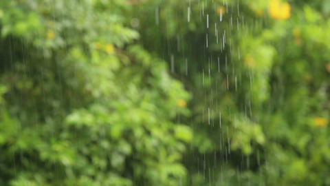 Rain Falls In The Tropical stock footage