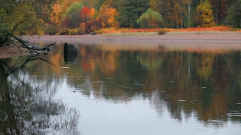 bright autumn landscape Footage
