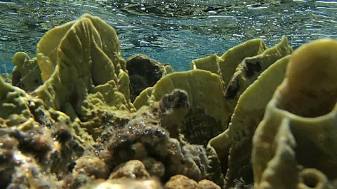 Amazing Red Sea