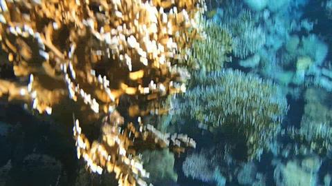 Amazing Red Sea 1